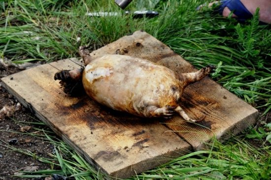 the 8 most disgusting foods in the world8