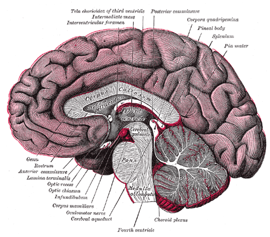 Brain and Incredible Facts about the Human Body