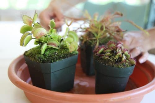 soil carnivorous plants apartment