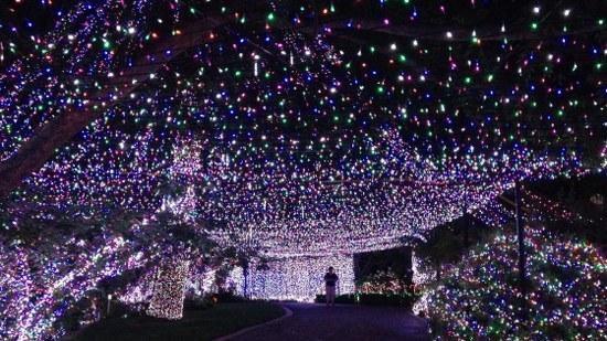 LED Christmas Lights half a million LED lights