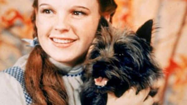 Toto - Most Famous Dogs Of All Time