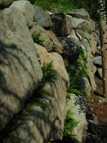 stone and ferns