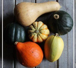 Winter Squash - a Visual Guide