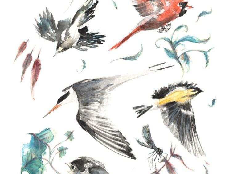 """Birdwatching"" by Cat Graff"
