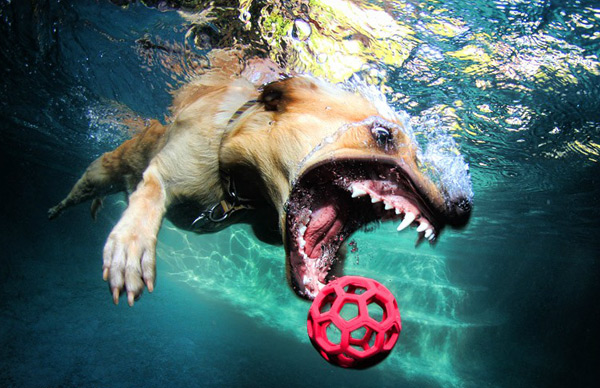 Hilariously Ferocious Underwater Dogs water photography dogs