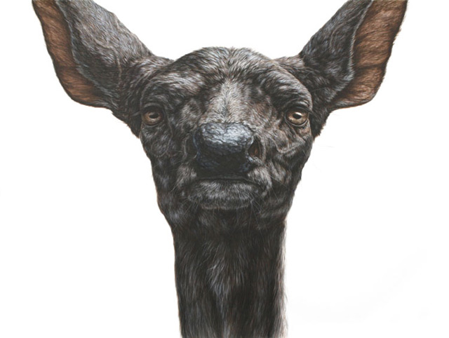 Remarkable Animals Painted in Ink by George Boorujy illustration art animals