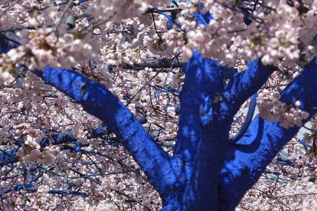 Blue Trees by Konstantin Dimopoulos trees environment
