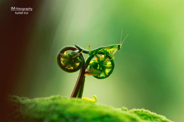 bicho en bici