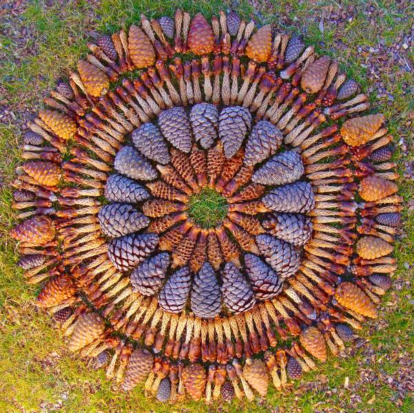 Flower Mandalas by Kathy Klein plants land art flowers