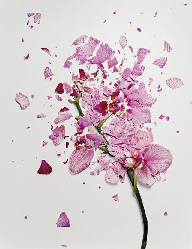 Flowers Soaked in Liquid Nitrogen Shatter on Impact plants flowers