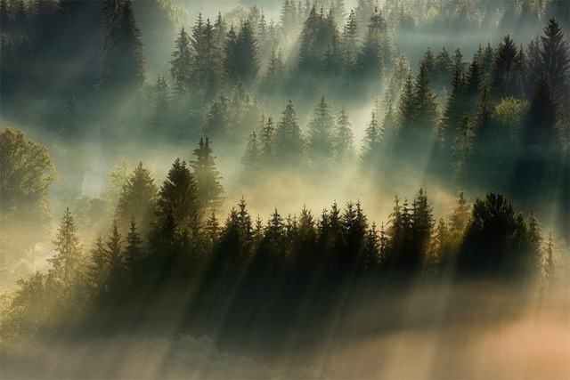 https://i2.wp.com/www.thisiscolossal.com/wp-content/uploads/2012/11/fog-3.jpg