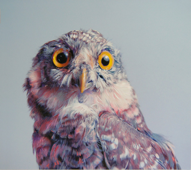 Colored Owl Drawings by John Pusateri drawing birds