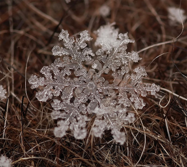 Remarkable Macro Photographs of Ice Structures and Snowflakes snow macro ice