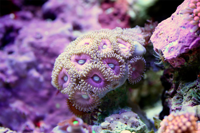 Vibrant Macro Photographs of Coral by Felix Salazar underwater nature macro coral animals