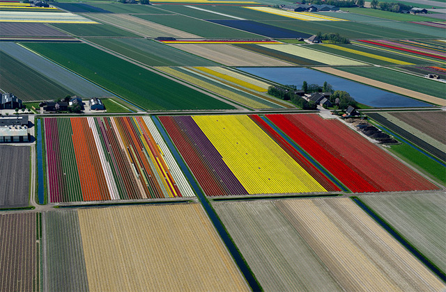 Aerial Photographs of Tulip Fields in the Netherlands by Normann Szkop Netherlands landscapes flowers