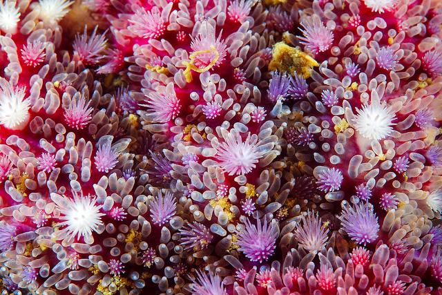 Gorgeous Patterns of the Sea: Macro Photographs of Starfish by Alexander Semenov starfish ocean nature macro