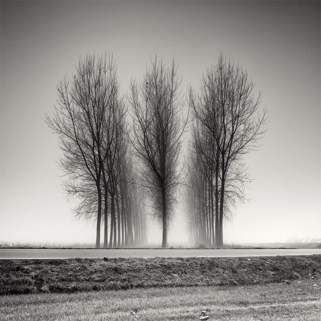 Long Exposure Tree Landscapes by Pierre Pellegrini trees long exposure landscapes black and white