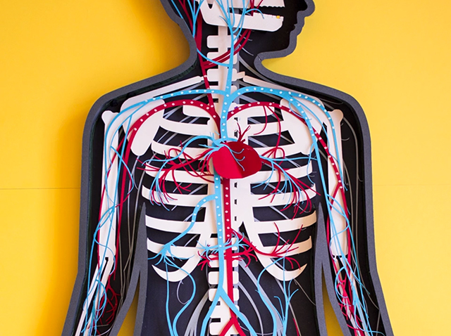 Paper Stop Motion Teaser for the Human Body Anatomy App stop motion paper kids illustration app anatomy