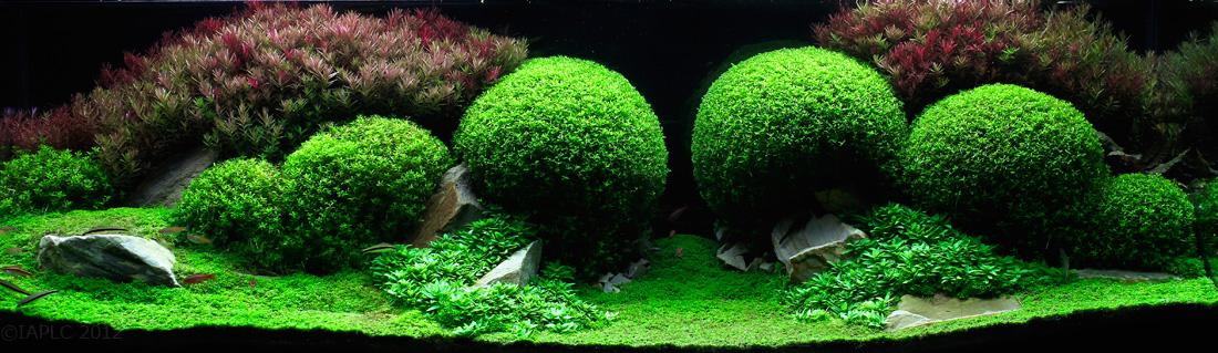 aqua-8