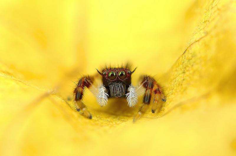 Eye of the Spider: Hypnotizing Macro Photos of Exotic Spiders Staring Directly into Your Mind spiders macro