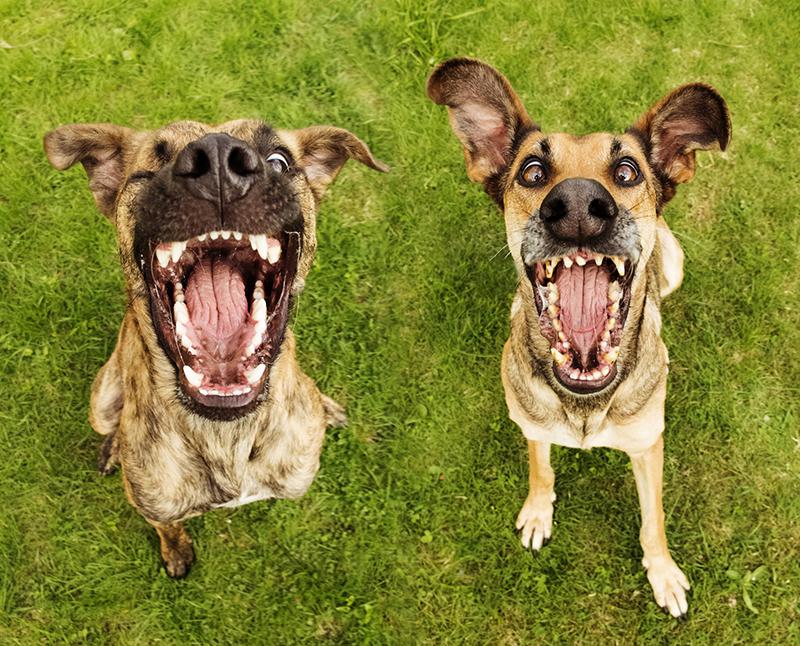 Absurdamente expressivas cão Retratos de cães Elke Vogelsang