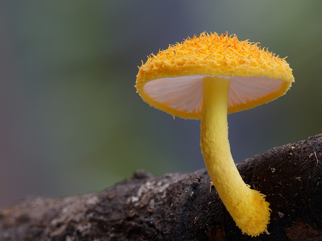 Fantastic Fungi: The Startling Visual Diversity of Mushrooms Photographed by Steve Axford science nature mushrooms Australia