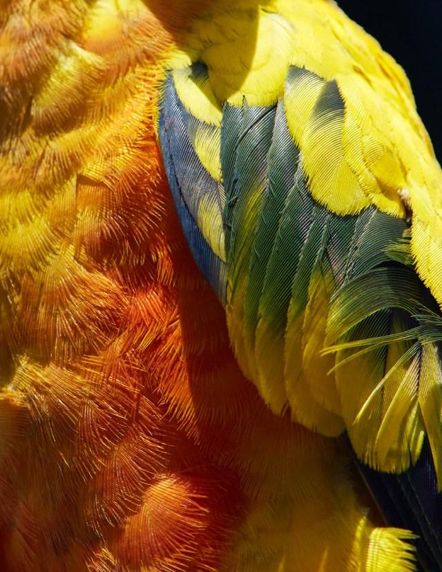 thomaslohr_Birds_17