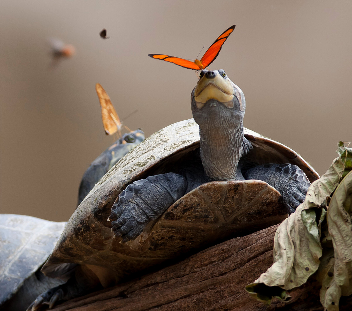 turtles-2