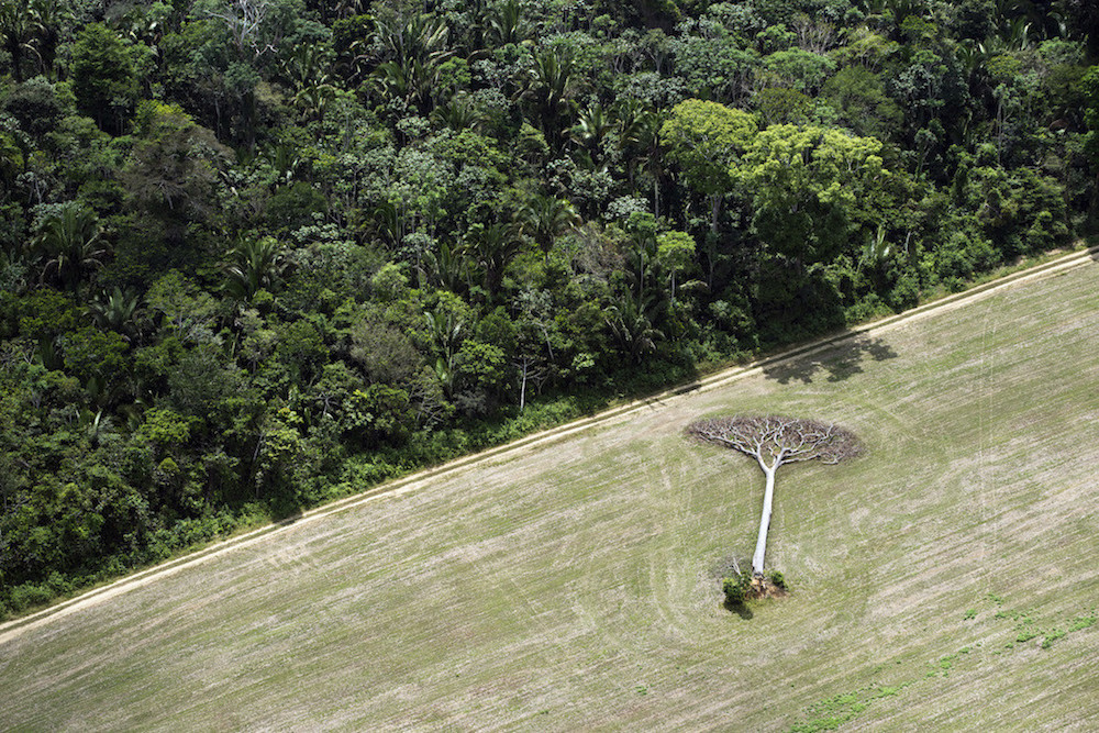 September 16, 2013. Brazil. Aerials from Manaus to Santarem. Photo by Daniel Beltra for Greenpeace