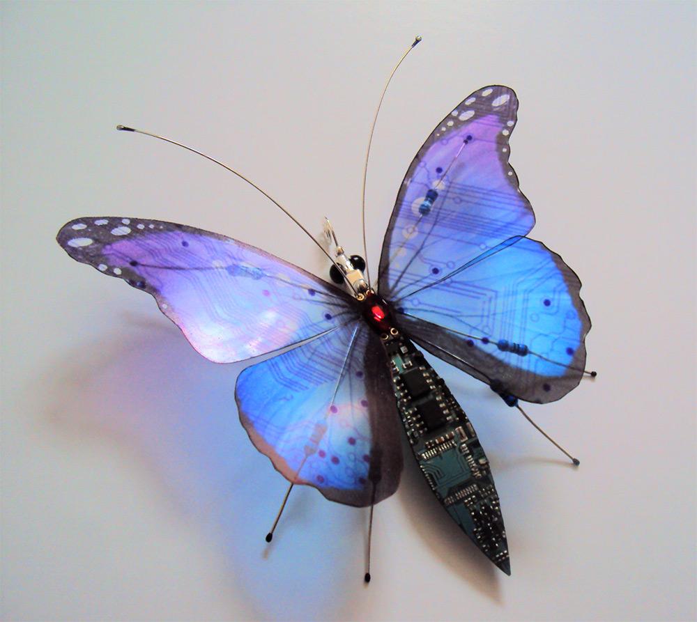 bug-6