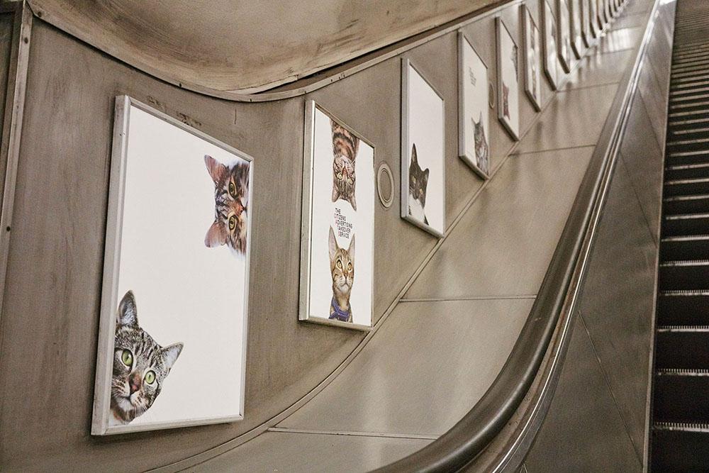 cats-9