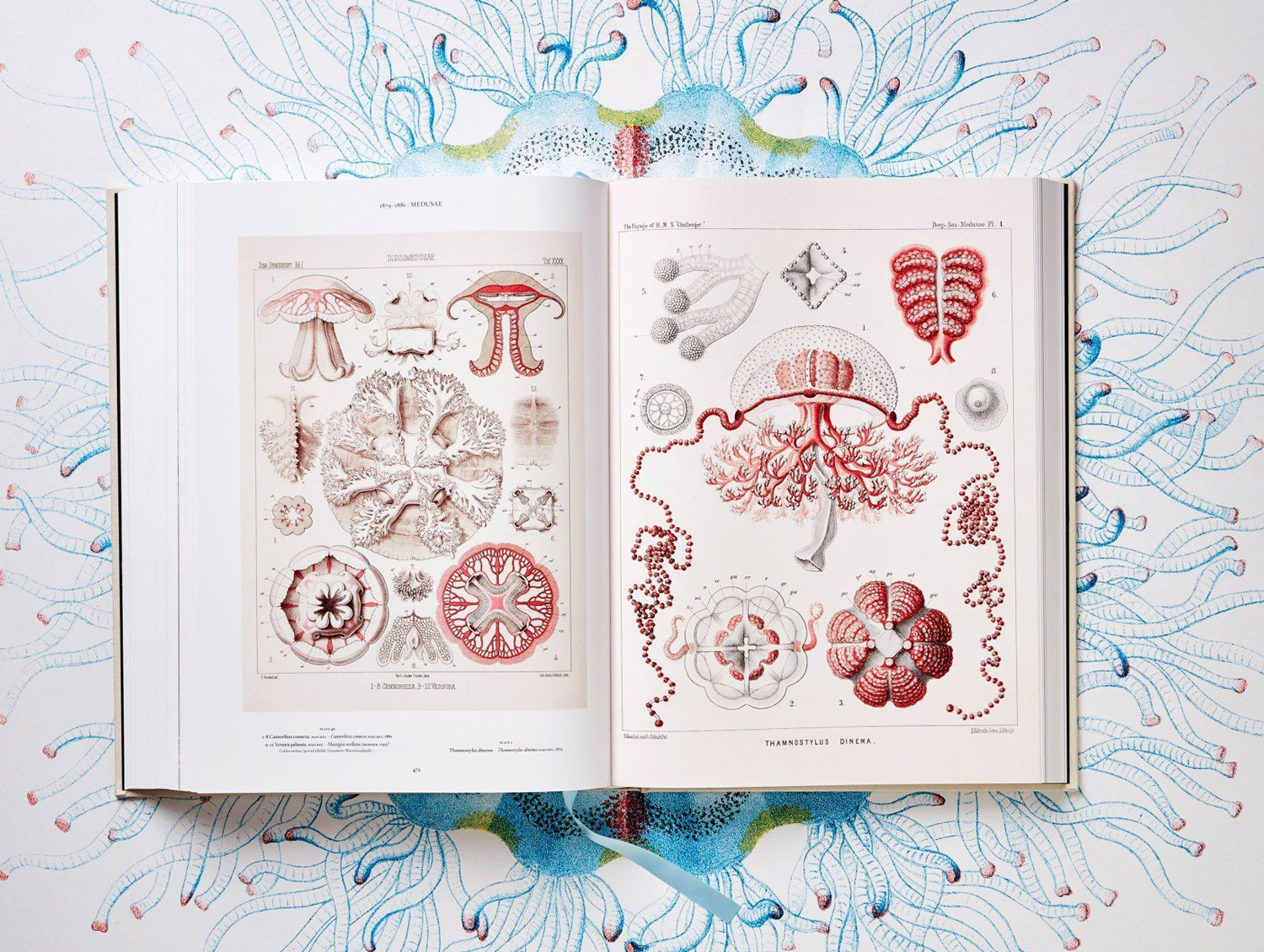 The Art And Science Of Ernst Haeckel A Compendium Of