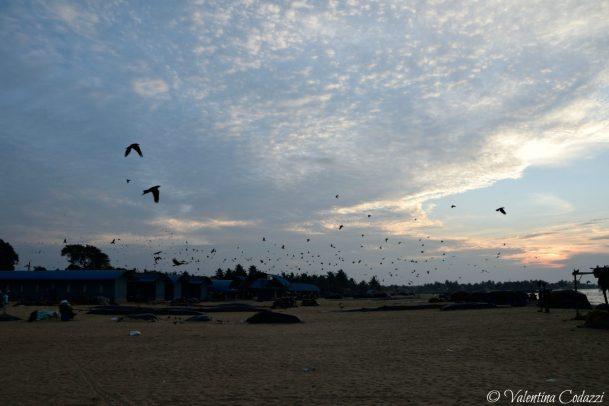La spiaggia di Negombo