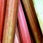 rhubarb daiquiri