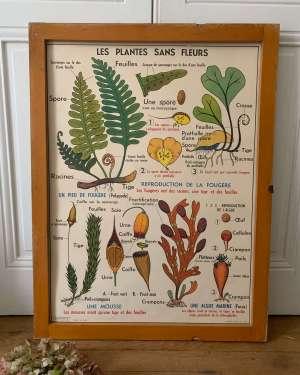 affiche mdi vintage plantes