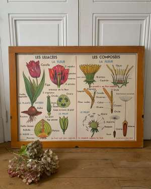 affiche vintage mdi fleur