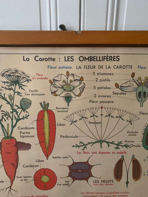 ancienne affiche mdi cerisier carotte