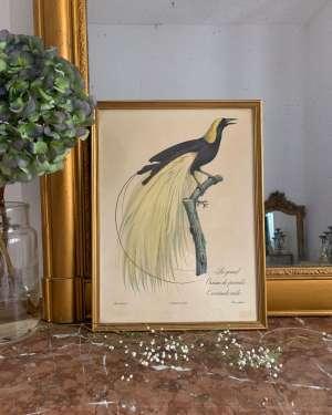 Lithographie ancienne vintage oiseaux