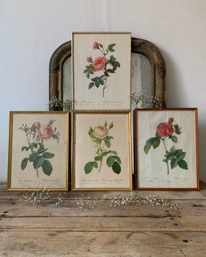 Lithographie ancienne vintage roses redouté