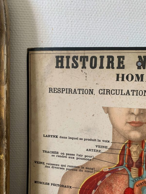 ancienne planche deyrolle corps humain fin 19ème