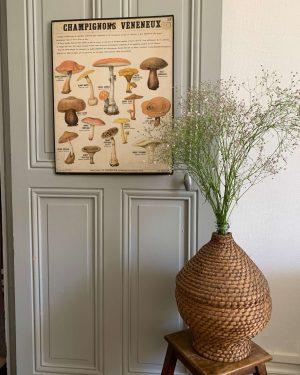 ancienne affiche deyrolle champignons vénéneux fin 19ème