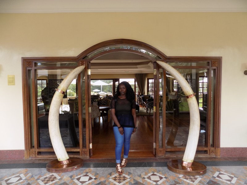 Elephant tusk! Why you should visit kenya