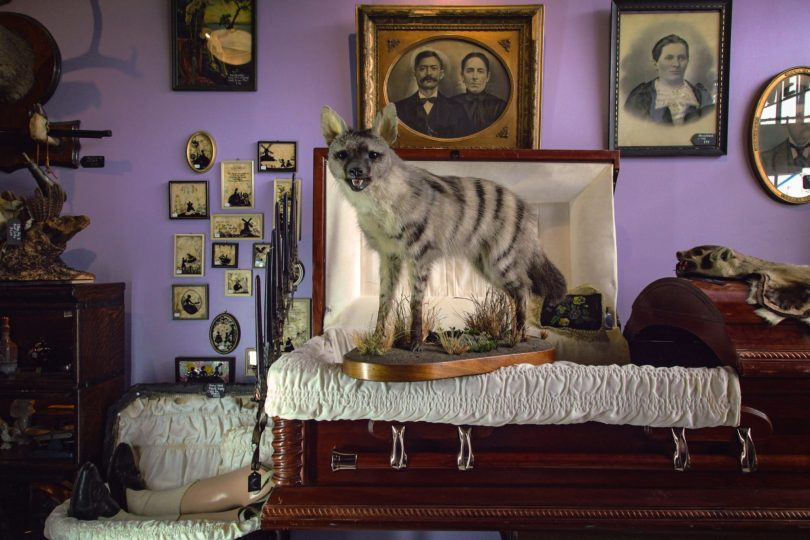 Hyena and casket