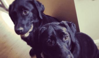 Purina One SmartBlend True Instinct Dog Food: Keira and Mack LOVE It! #ONEDifference