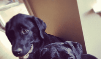7 Fun and Frugal Valentine's Day Gifts for Dogs