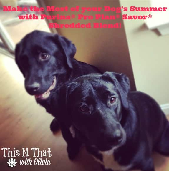 Make the Most of your Dog's Summer with Purina® Pro Plan® Savor® Shredded Blend!
