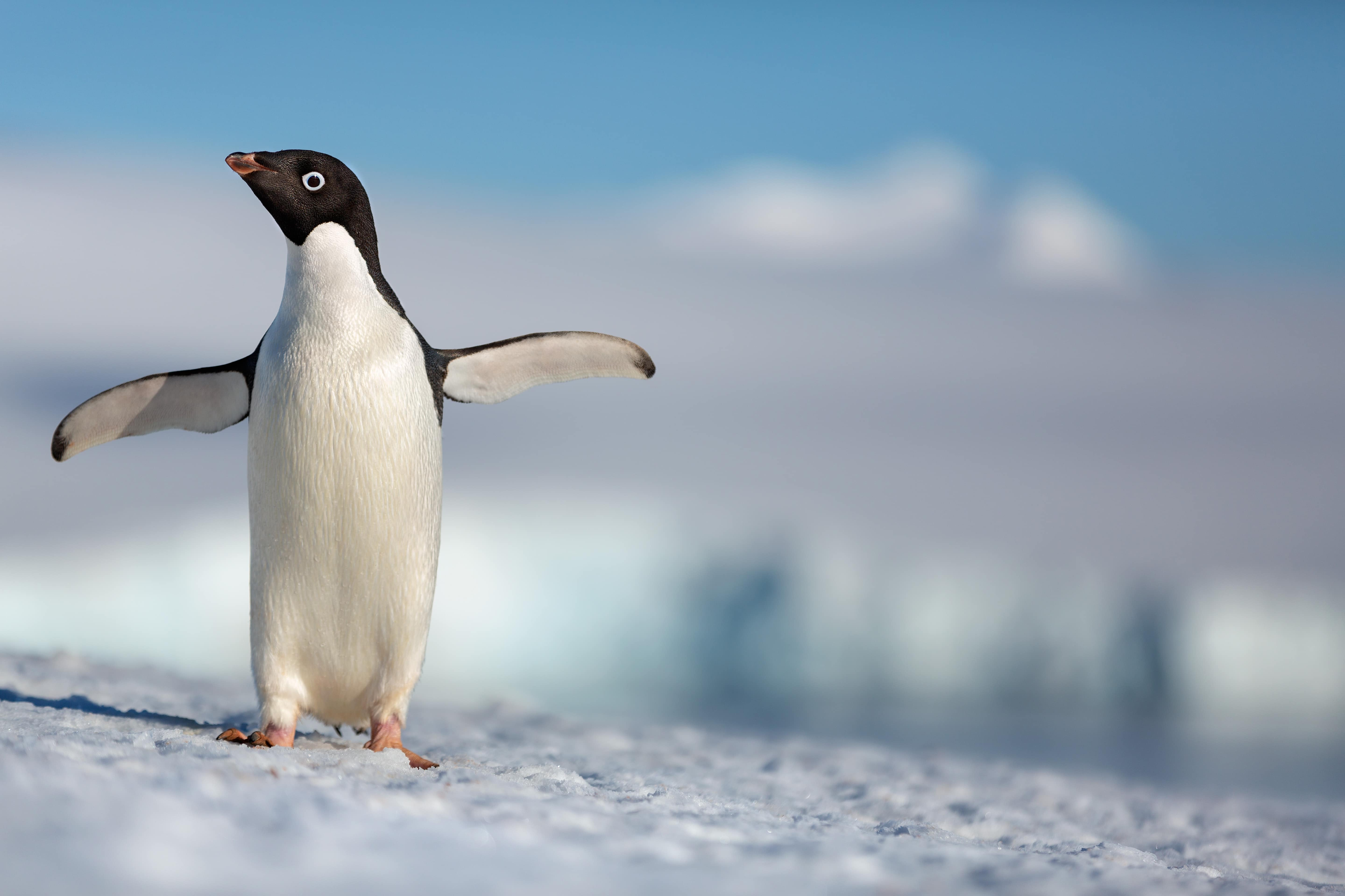 Disneynature's PENGUINS Launches First Trailer to Celebrate Earth Day!!! #DisneynaturePenguins