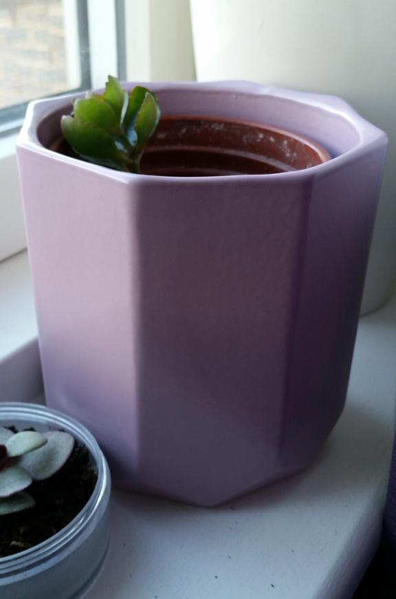 succulent, houseplant, lilac plant pot, plant pot, purple plant pot