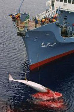 whaling_250375.jpg