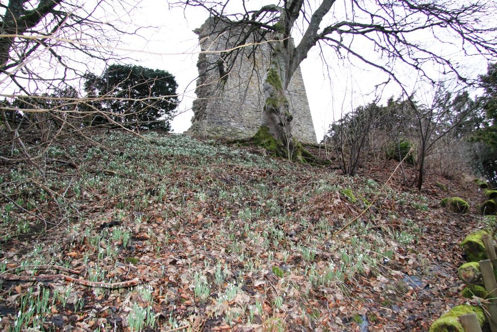 Signs of Spring at Drumin Castle?